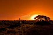 Kruger Nationalpark in Südafrika