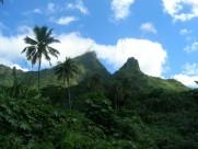 Dichter Urwald auf Tahiti