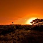 Der Krüger Nationalpark in Südafrika