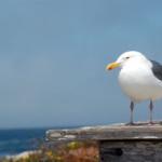 Ostseeküste in voller Pracht: Fischland-Darß-Zingst