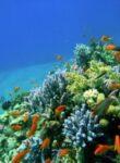 Hurghada – Badeort und Taucherparadies